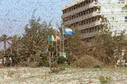 The Locusts Continue Global Trek